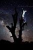 -star-tree-climbing-headlamp-wm.jpg