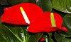 -09-08-2015-als-garden-032.jpg