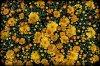 -flowers_1.jpg