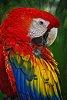 -parrot_chlady.jpg