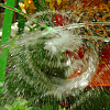 -imgp3564-water-wheel_edited-1.png