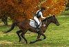 -ride-fast-horse.jpg