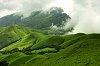 -green-velvet.jpg