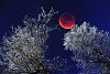 -frosty_trees_lunar_eclipse_composite_lowres.jpg