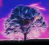 -2014_tree.jpg