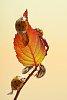 -last-leaf.jpg