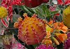 -cactus-flowers-green-house.jpg