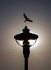 -lamp.jpg