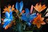 -imgp8711orange-blue-flowers.jpg