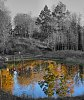 -colorful-pond_2855614573_o.jpg