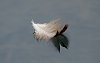 -floating-feather-003.jpg