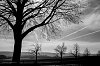 -landscape1-bw.jpg