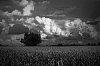 -corn-clouds3.jpg