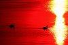 -swans-sunrise-july-2012js.jpg