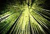 -bamboo-forest.jpg