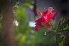 -hibiscus-1_edited-1.jpg