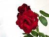 -dom-col_p-iksi_roos_imgp5134_190816.jpg