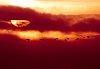 -geese-sunset.jpg