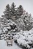 -mn-arb-bench-snowy_sm-z3574-.jpg