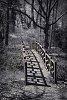 -intothewoods.jpg