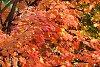 -ashtabula-county-ohio-autumn-leaves.jpg