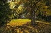 -fall-colours-no-watermark-nik-.jpg