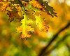 -golden-fall-foliage-jbaronphotography.jpg