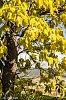 -mellow-yellow3-1.jpg
