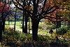 -path-thru-trees-imgp0497-60-.jpg