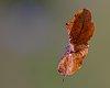 -flying_leaf.jpg