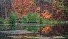 -fall-colours.jpg