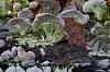 -lichen.jpg
