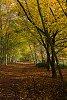 -wandlebury-woods_03.jpg
