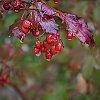 -fall-colors-copy.jpg