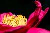 -camellia.jpg