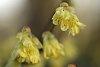 -yellow_flowers.jpg