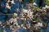 -wild-azalea-contest.jpg