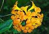 -flower-up-close-1.jpg