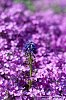 -flower-1.jpg