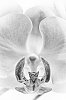 -orchid-bw.jpg