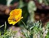 -flower.jpg