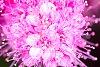 -_img0205-exposure.jpg