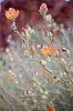 -desert-blooms.jpg