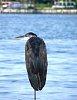 -090718-one-leg-sea-bird-02-close-up.jpg