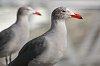 -061123-236twobirds.jpg