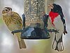-bird-feeder06may2017-060-1280x958-.jpg