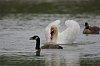 -pentax-swan1.jpg