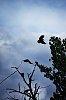 Ravens-044r.jpg