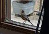 -birds-2971.jpg