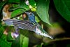 -bird-contest120318_1.jpg